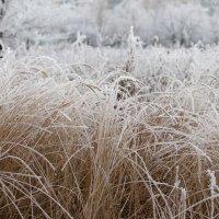 Поле..снежное поле.. :: Аl Anis