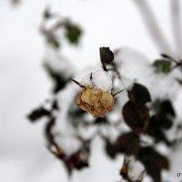 Под снег и в зиму :: Олег Лукьянов