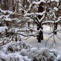 Из снов ночных метель связала... :: Лесо-Вед (Баранов)