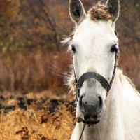 Лошадь :: Константин Филякин
