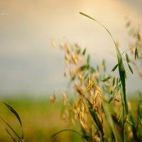 В поле :: Наташа Кошкина