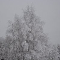Снежные берёзы :: laana laadas