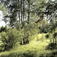 Нежный цвет летней зелени :: Михаил Михальчук