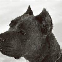 Портрет собаки :: Дмитрий Конев