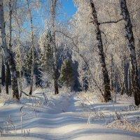 Зимний лес. :: Kassen Kussulbaev