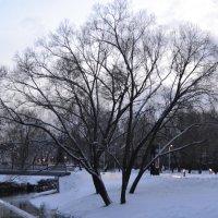 К нам пришла зима.. :: zoja
