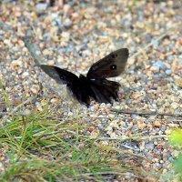 Бабочка :: Светлана SvetNika17