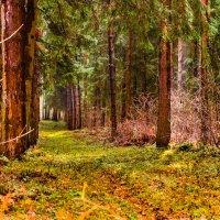 Тихо в лесу_2 :: Александр Белоглазов
