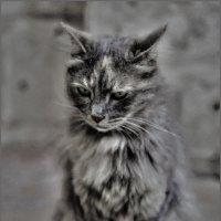Святая сестра Мур Мяшка(2)-из серии Кошки очарование мое! :: Shmual Hava Retro