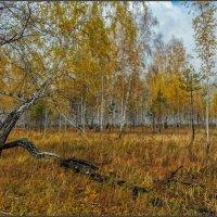 Немного про октябрь.... :: Сергей Бережко
