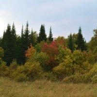 Осенний лес :: Вера Андреева
