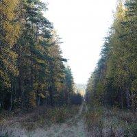Карельский лес :: Елена Павлова (Смолова)