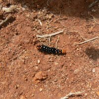 Скоро стану бабочкой :: grovs