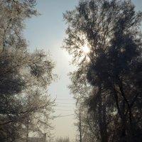 зимняя сказка :: Екатерина Червонец