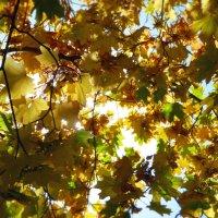 еще раз про осень :: ольга хадыкина