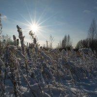 солнечным зимним днём :: Алексей -