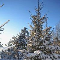 Новогодняя ель :: Светлана