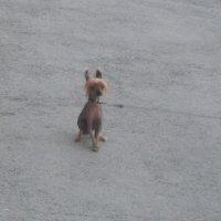 модная собачка :: tgtyjdrf