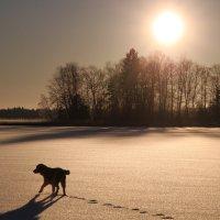проверка льда :: liudmila drake