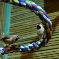 Птицы :: Lera Morozova