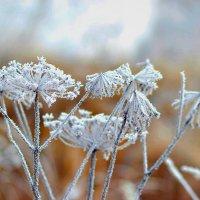 Морозное утро :: Василек photo