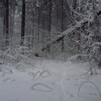 IMG_4256 - февраль-2013 :: Андрей Лукьянов