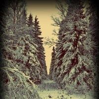 зима :: Валерия Яскович