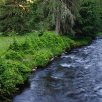 Река в лесу :: Николай Код