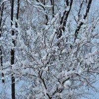 В Николаев пришла зима :: Владимир KVN