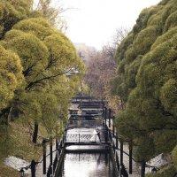 Райский сад :: Андрей Ziikes