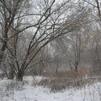 Зимний лес :: Джулия К.