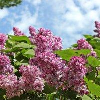 Окно в весну :: Лидия (naum.lidiya)