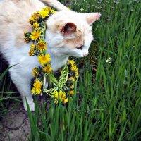 кошка :: Татьяна Королёва