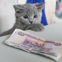 Масяня :: Андрей Домрачев