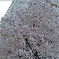 Зима, зима, зима... :: Нина Корешкова