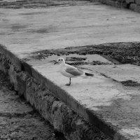 Одиночество :: astrolit