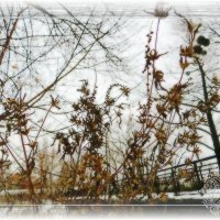 Художница зима :: Ирина Сивовол