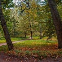 Тихие аллеи парка Монрепо :: Надежда Лаптева