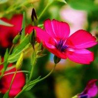цветочек :: Наталья ХХХХХ