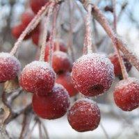 Засахаренные яблочки :: Иля Григорьева