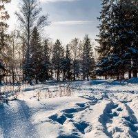 И наконец-то, пришла зима :: Andrey Kondor