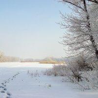 морозное утро :: Андрей ЕВСЕЕВ