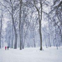 Парк :: Svetlana Sneg