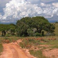Животный мир Уганды :: Евгений Печенин