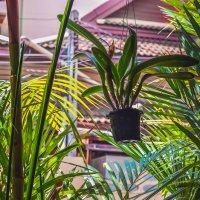 Зеленая стена кафе :: Ксения Базарова