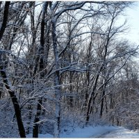 По дороге к Деду Морозу... :: Тамара (st.tamara)
