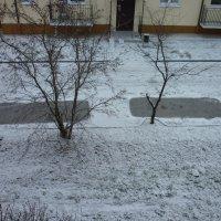 первый снежок) :: Oxi --