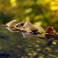 Краски осени :: Anastasia Bozheva