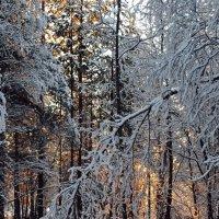 Зимний свет :: Ольга