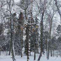 Зимний лес :: Людмила